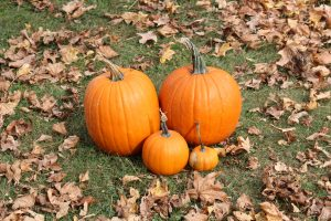 pumpkins and frugal fall activities to do with kids