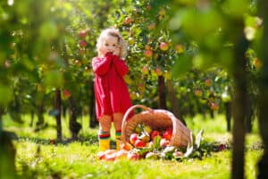 little girl in the fall picking apples with family