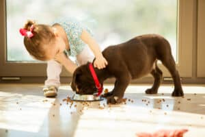 preschool girl feeding her dog